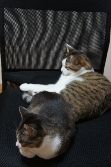 余裕を見せる2ネコ