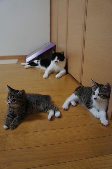 くつろぐ3猫