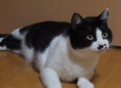 猫ウェルカム