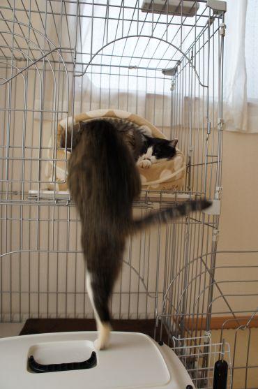 片足ジャンプ(低め)