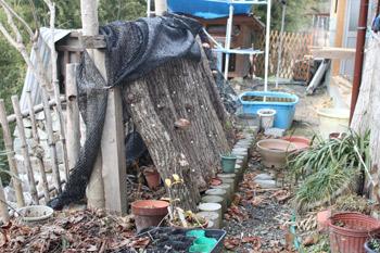 2012_0229原木椎茸