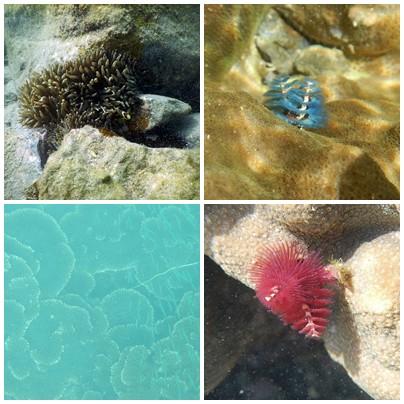 珊瑚4分割