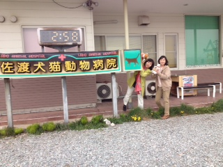 佐渡犬猫動物病院