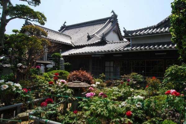 観音寺牡丹1