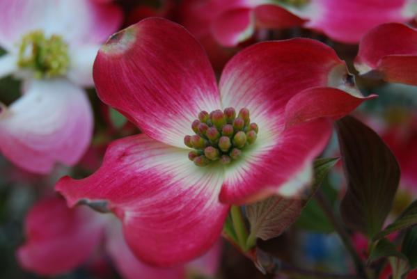 季節の花5