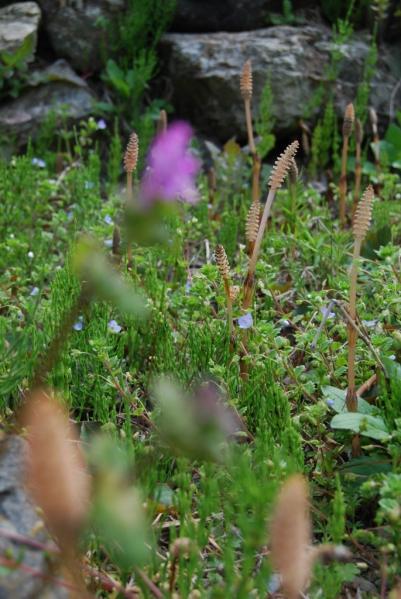 季節の花7