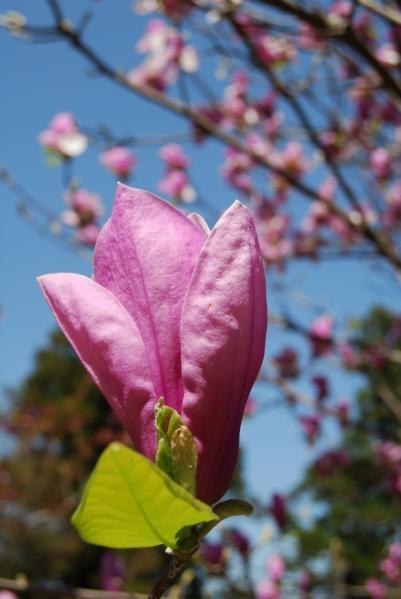 季節の花8