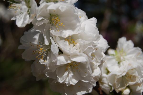 季節の花9