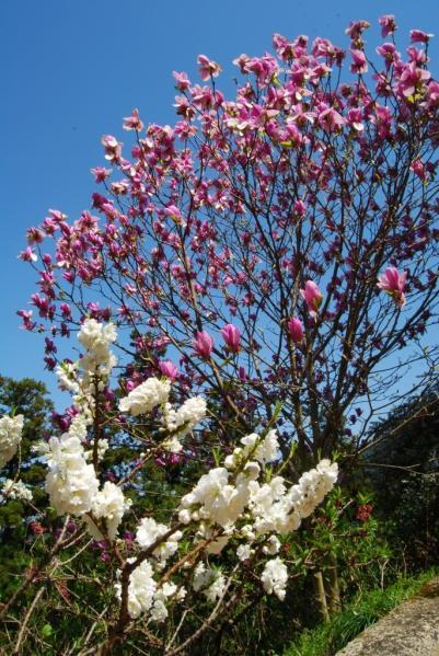 季節の花12