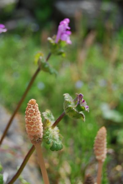 季節の花13