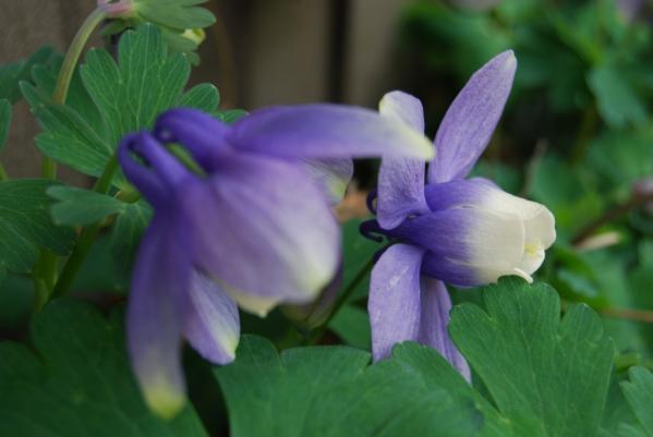 季節の花15