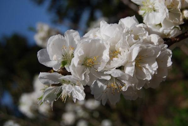 季節の花17