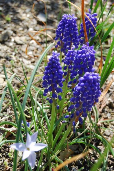 季節の花18