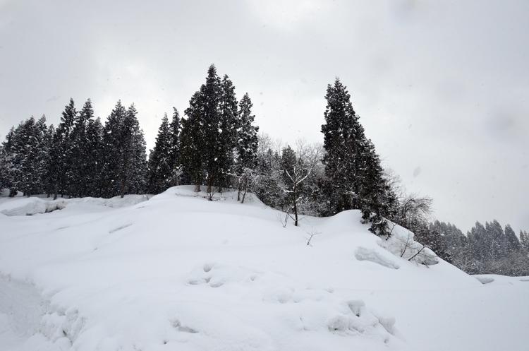 山里の雪-2
