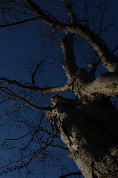 樹 朝陽を浴びて-1