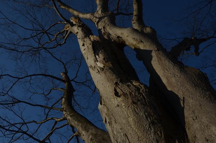 樹 朝陽を浴びて-3