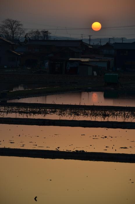 レンコン畑の夕陽-1