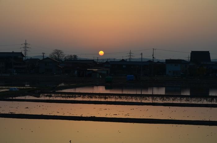 レンコン畑の夕陽-2