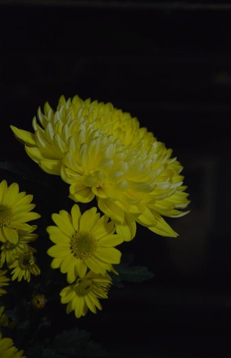 家の花-2