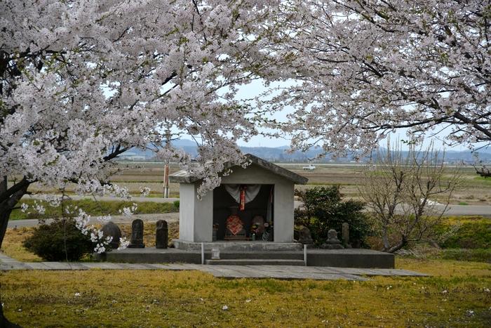 桜とお地蔵さん-2