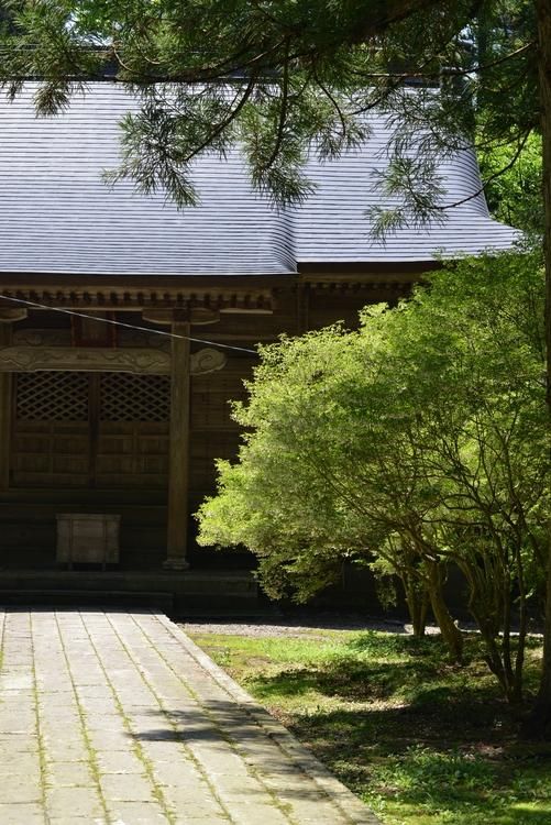 神社 新緑の候-2