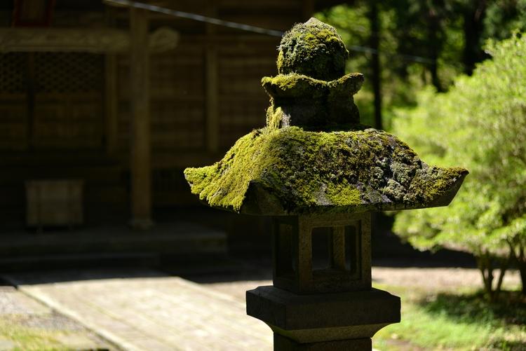 神社 新緑の候-3