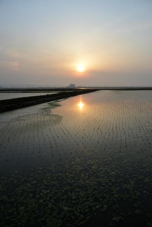 水田と夕陽-1