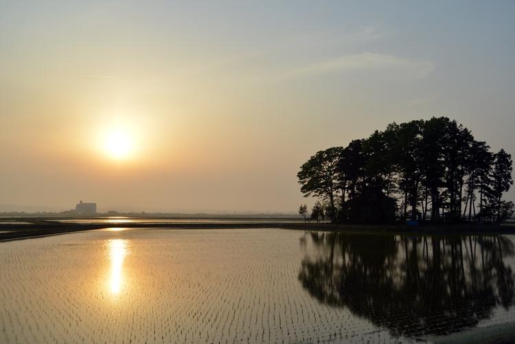水田と夕陽-2