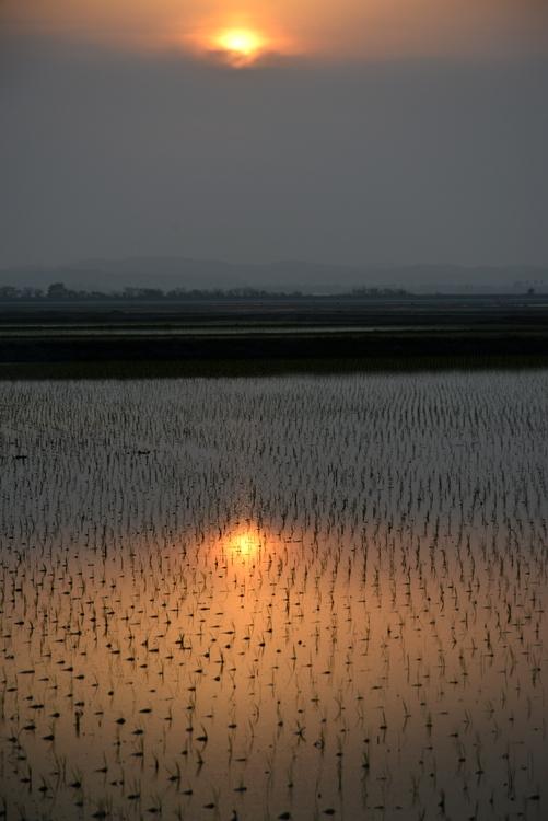 水田と夕陽-3