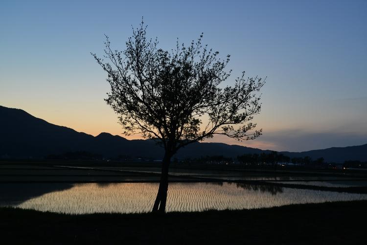 水田の夕暮れ-2