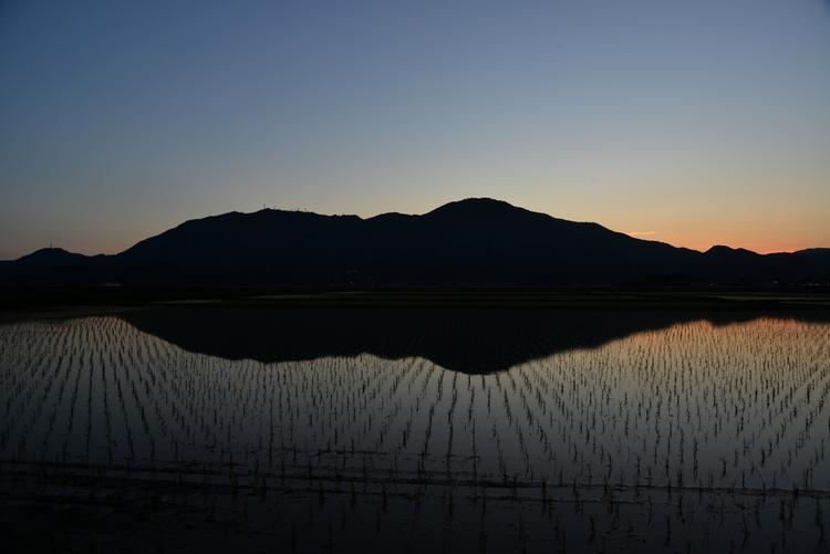 水田の夕暮れ-3