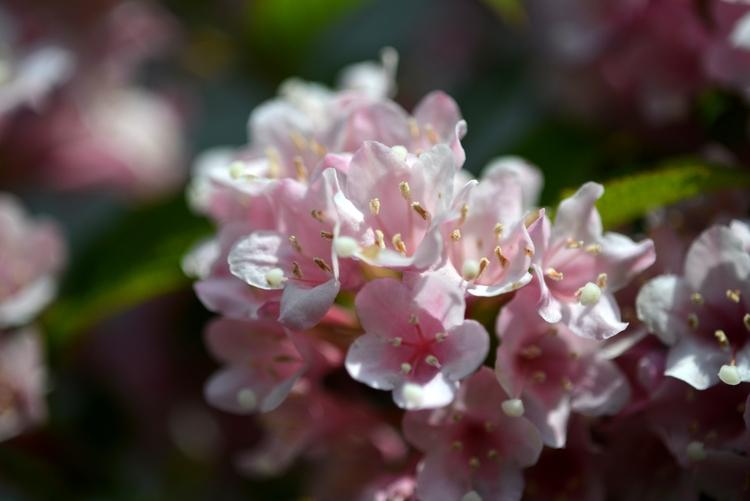 花と花たち-2-1