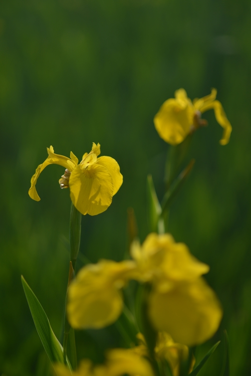 花と花たち-2-2