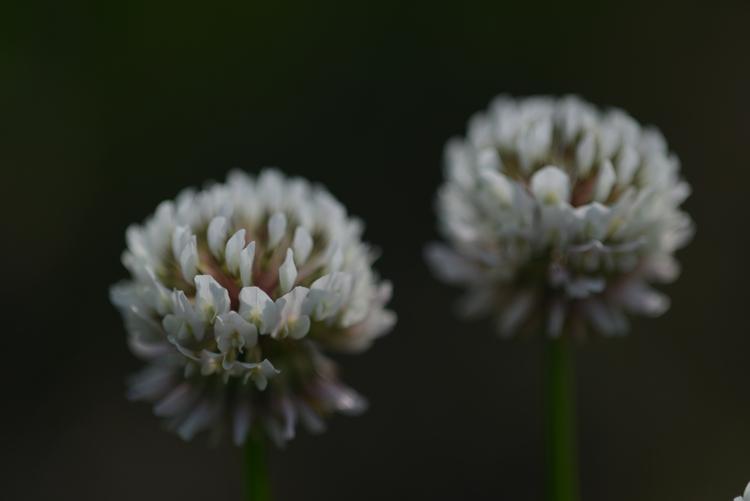 花と花たち-2-3