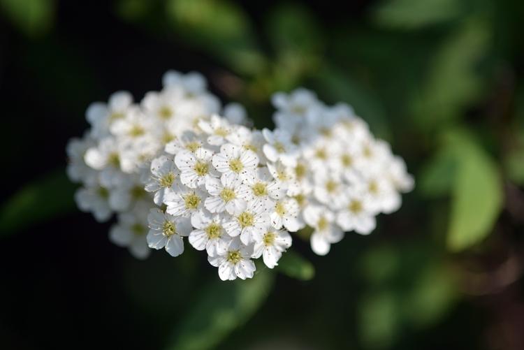 花と花たち-2-4