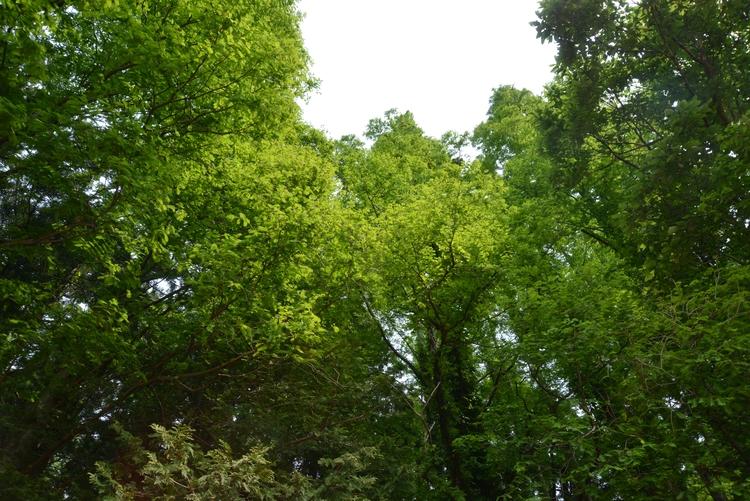 新緑の林-3