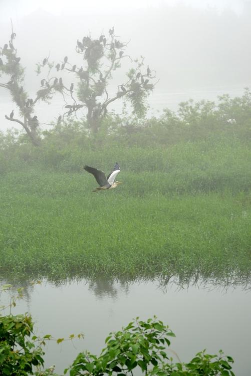 霧の巣場-2
