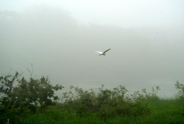 霧の巣場-1
