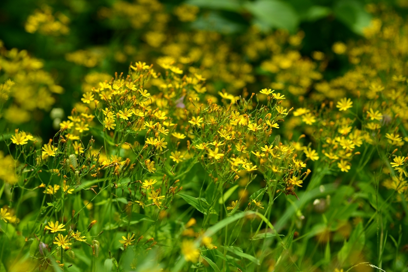 小さな花たち-1