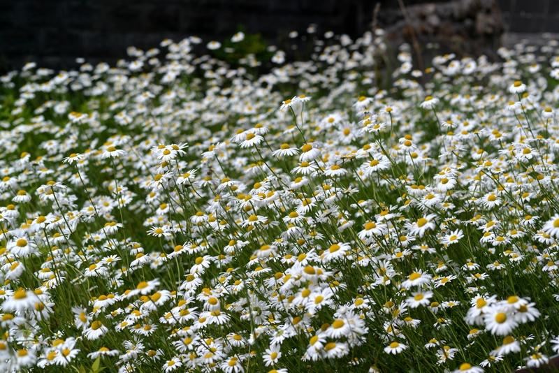 小さな花たち-3