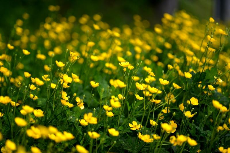 小さな花たち-4