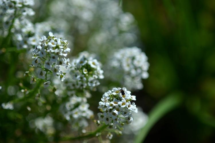 珍しい花-2