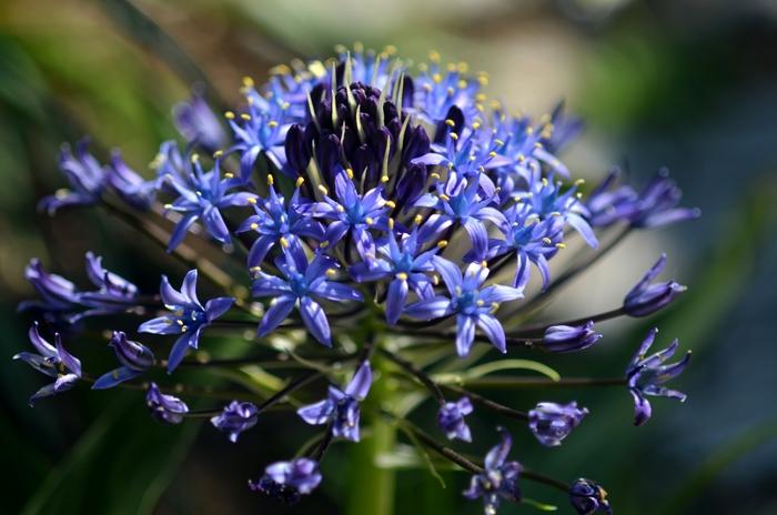 珍しい花-3