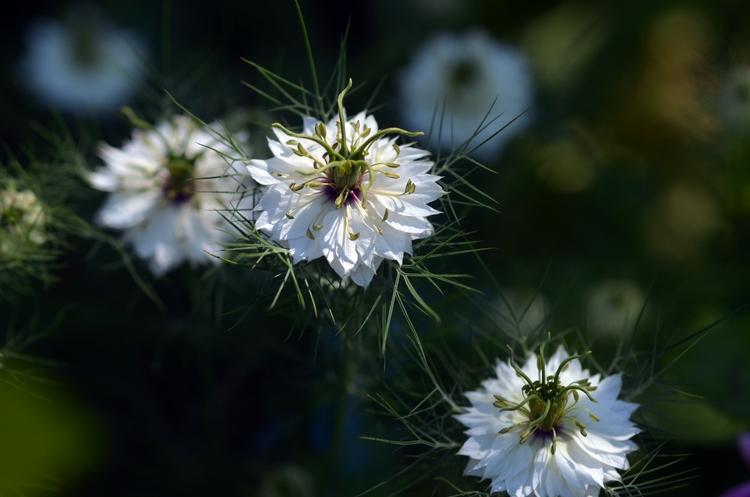珍しい花-4
