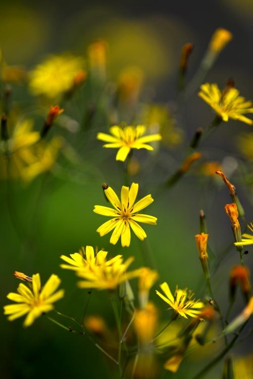 駐車場に咲く花たち-2