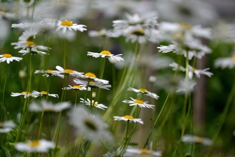 駐車場に咲く花たち-4