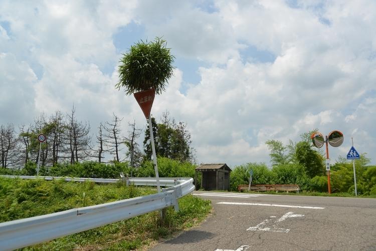 ど根性竹-1