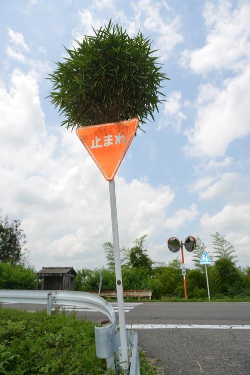 ど根性竹-2