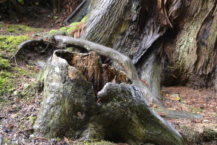 寺で出会った木と根-1