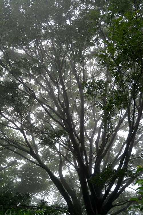 霧の中-3